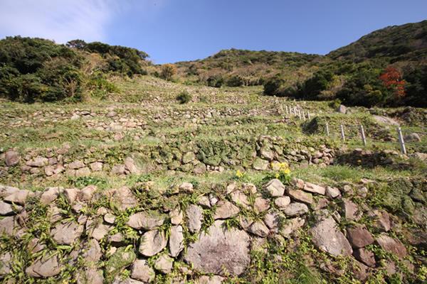 出典:谷山展望所から見る段々畑-南さつま海道八景-   いろは南さつま